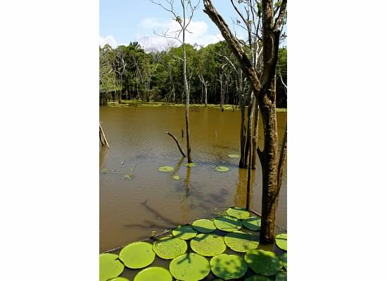 Giant Lily Pad Swamp