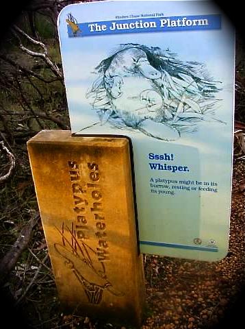 Platypus Walk Flinders Chase