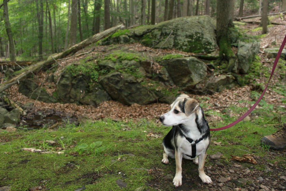 Charlie Mae earns her trail name on the Appalachian Trail in the Catskills.