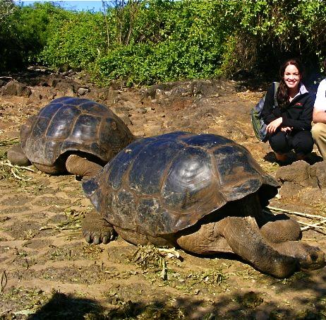 galapagos tortoise charles darwin research station