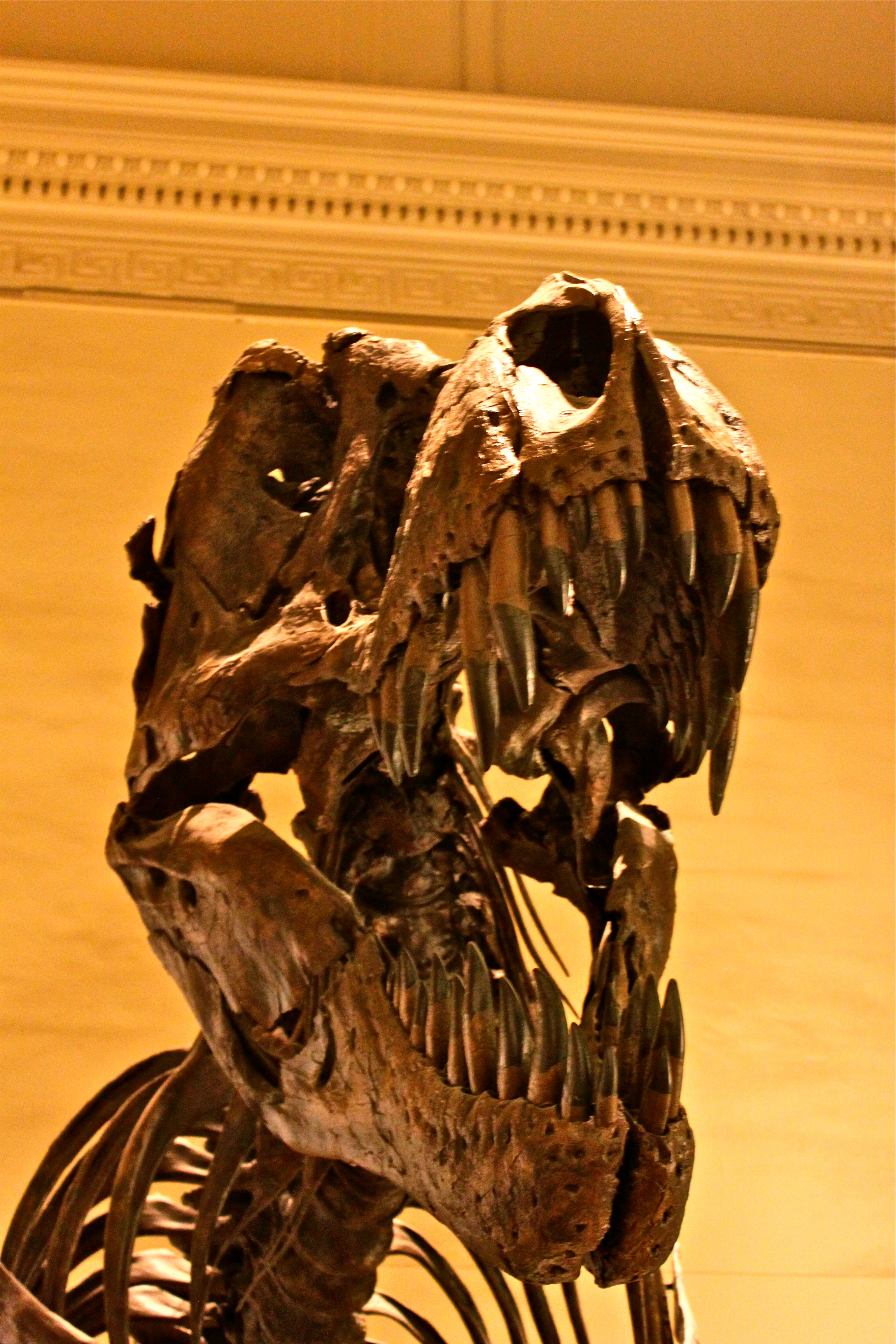 smithsonian institute national museum natural history washington dc