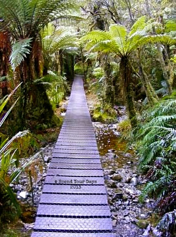 Lake Matheson Fox Glacier New Zealand south island