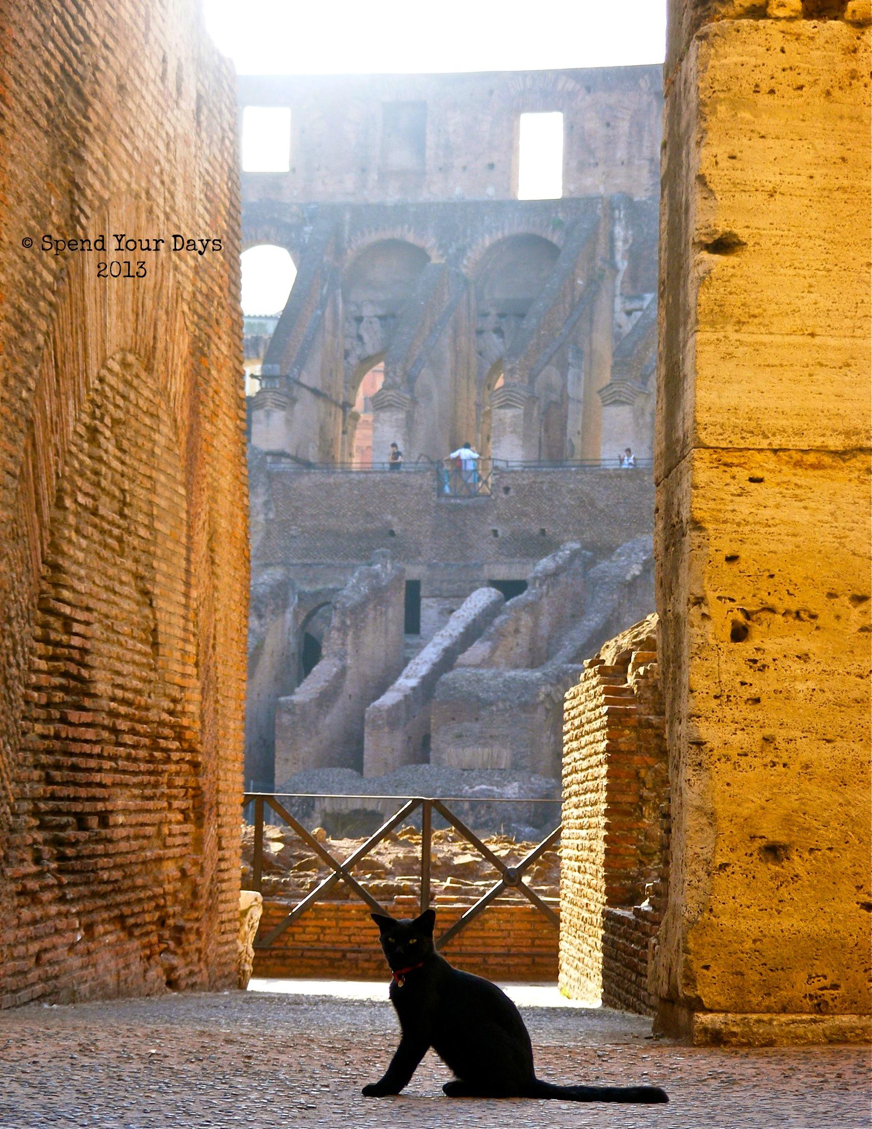 rome italy colosseum cat